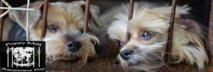 Puppy Mill Awareness Day Site Banner
